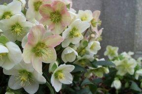 【花と緑のフェスティバル】2017花の即売!ガーデニング・アレンジメントのコンテスト開催!