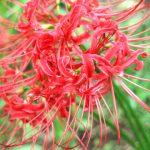 穴場のパワースポット【仏隆寺】千年桜・秋は彼岸花!奈良県最大・最古の桜