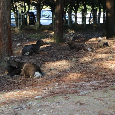 サイクリング&ウォーキング【モデルコース】奈良観光ゆっくり景色を楽しもう!