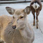 【奈良の天気】四季の紹介・気候に合った持ち物・観光前にチェックしよう!
