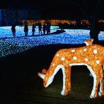 冬花火2007【なら瑠璃絵】奈良公園冬のライトアップ2月8日~14日