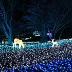 奈良公園イルミネーション「瑠璃絵」2017に行ってきた!