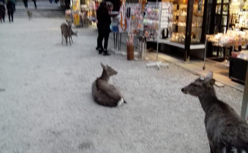 どこに泊まる?奈良駅立地別にまとめてみた。東大寺・興福寺・春日大社に近い宿・風情のある立地は?