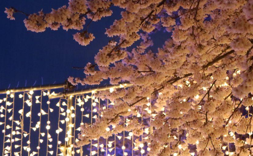 【花見】関西まだある穴場!奈良中南部の桜まつり、桜と合わせてイベントも開催!屋台やフードフェスも