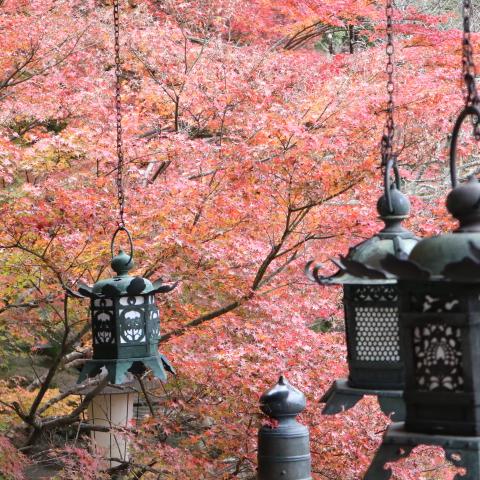【談山神社】インスタ映えする紅葉スポット!大化の改新の地、パワースポットはここだ