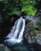 【東吉野村】平成の名水百選・春はシダレ桜・冬は霧氷・キャンプBBQに最適な自然の宝庫