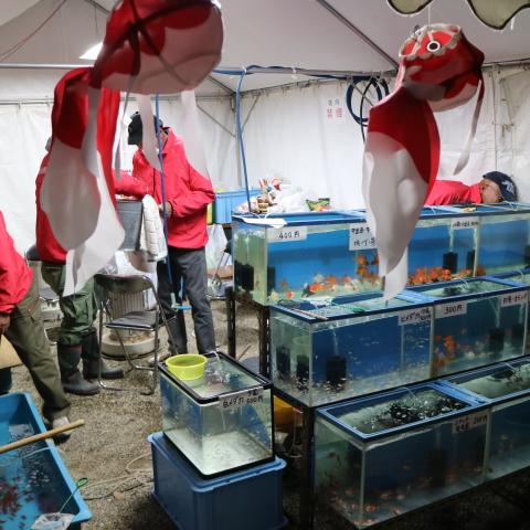 金魚の電話ボックスだけじゃない大和郡山・金魚すくい選手権・金魚資料館もある金魚づくしの町