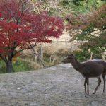 紅葉 関西 奈良公園 紅葉スポット インスタ映えスポットはどこだ 周辺の駐車場も紹介