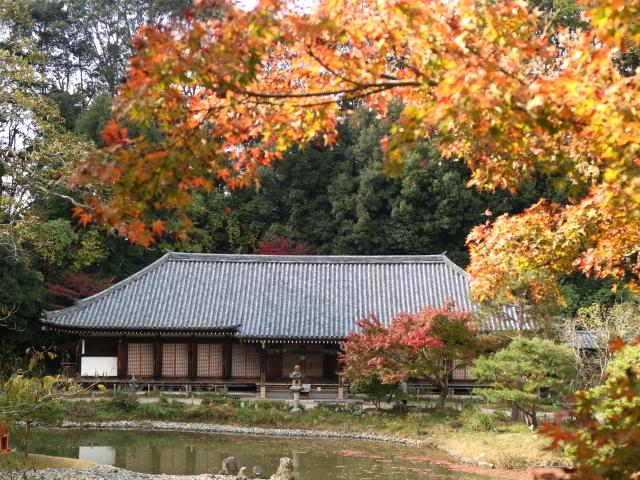 浄瑠璃寺の紅葉ブログ、ランチして岩船寺から帰りにクローバー牧場へ