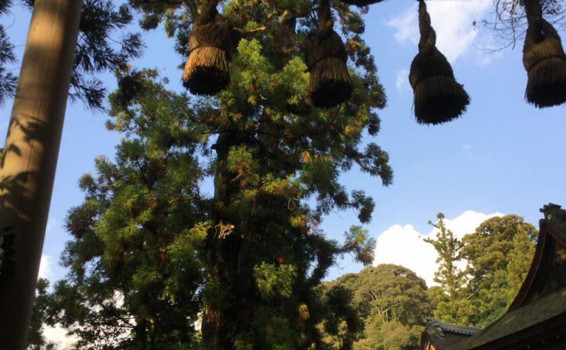 御朱印 ラリー「大和七福八宝巡り」奈良の寺社 8社巡り 台紙は無料 七福神に+大神神社で福が倍